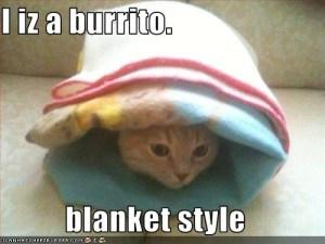 cat-burrito