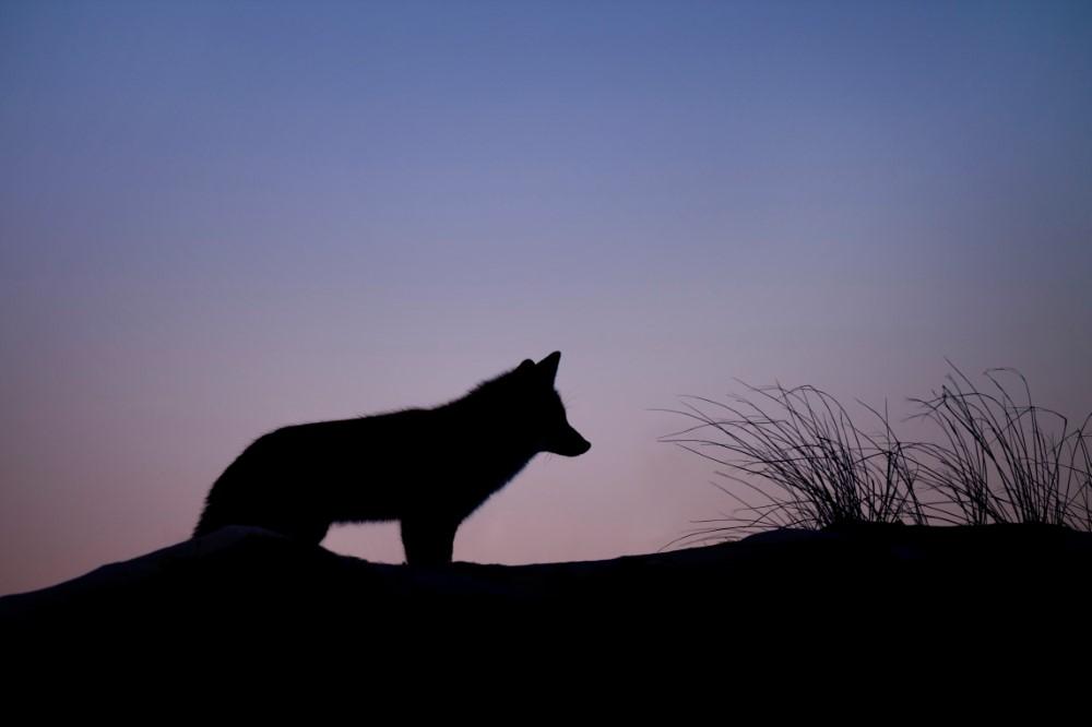 Penjelasan Hadits Setan Ibarat Serigala bagi Manusia