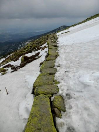 ścieżka