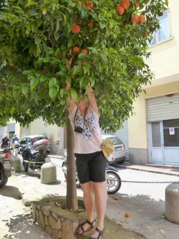 Polowanie na mandarynki