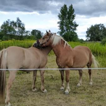 4. Konie na przedmieściach miasta