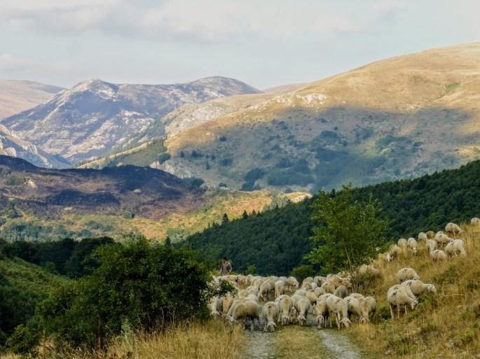23. owcer