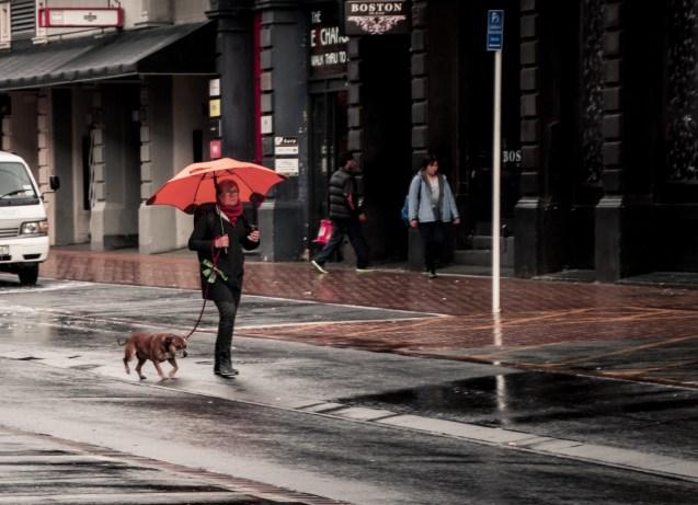 Orange umberella and the dog