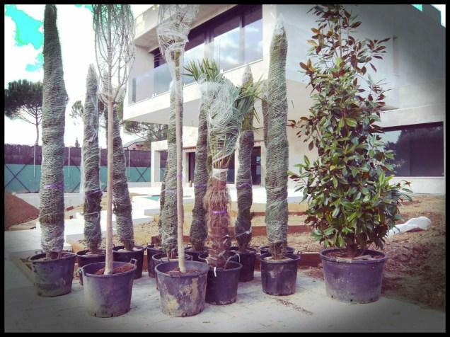 recepción planta jardín aravaca
