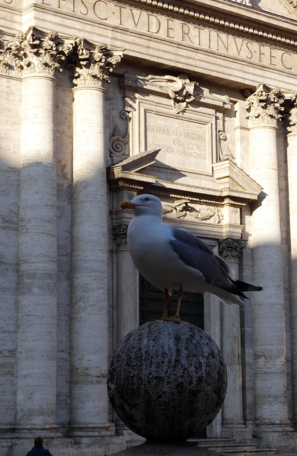 Pigeon at Piazza della Chiesa Nuova, Rome | What to do in a rainy day in Rome - the Eternal City1