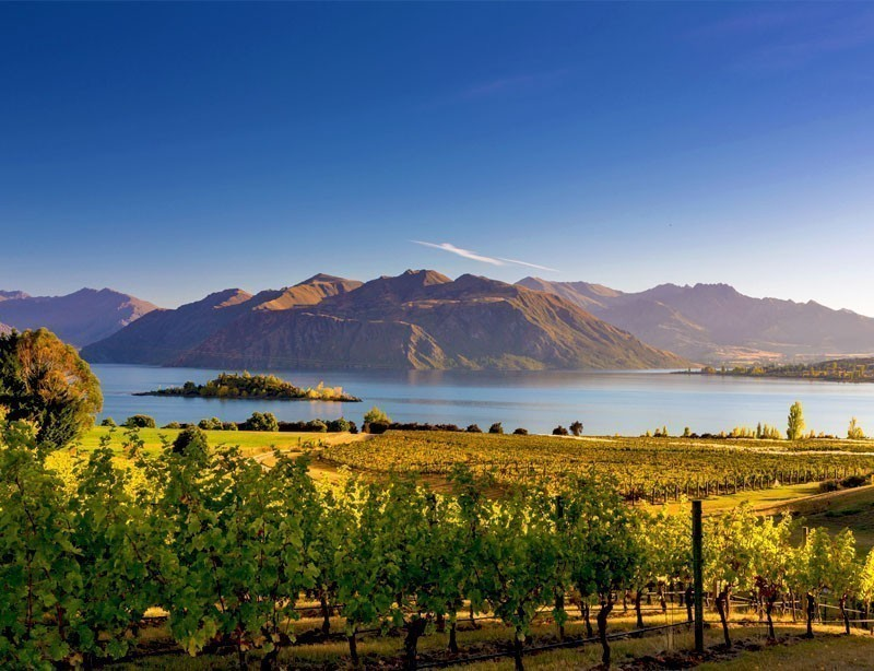 Morning on vineyard at Lake Wanaka, Otago, New Zealand | 10 Spectacular Places to Visit Before They Become Famous