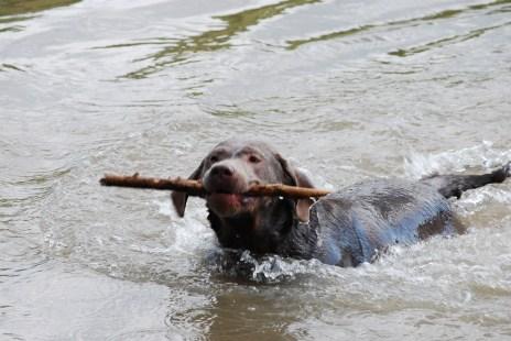 Labradore sind Therapeuten, die uns manchmal den richtigen Ansatz für neue Wege zeigen.