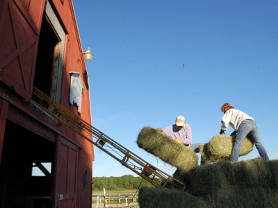 Stacking hay in the loft