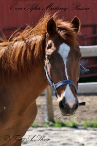 Photo of a horse named Cinnamon