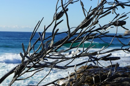 Sculpture by the Sea 7