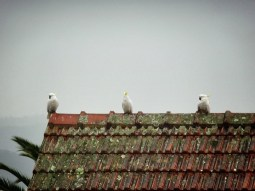 A few friends hang out on the roof