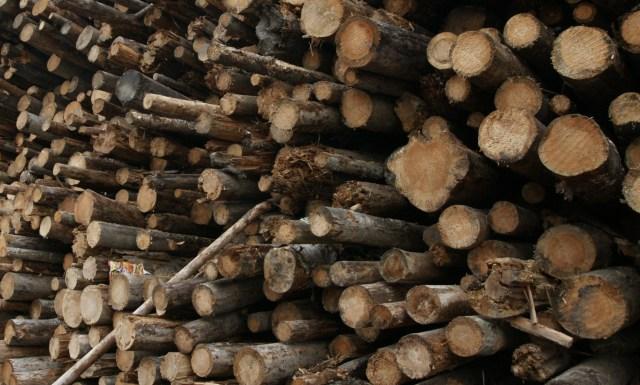 Львиную долю карельского экспорта составляет сырье, в том числе - древесина. Фото: Губернiя Daily