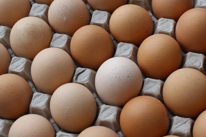 О яйцах Сегежской птицефабрики остались одни воспоминания, но даже их накануне выборов можно превратить в политический капитал. Фото: vk.com