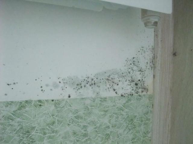 Грибок покрывает стены. Фото: Алексей Владимиров