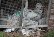 """Звероферму в Пряже называют """"фермой смерти"""" за массовую гибель животных. Фото из социальных сетей"""