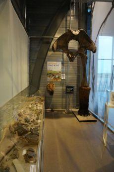 Archeological Finds Rotterdam