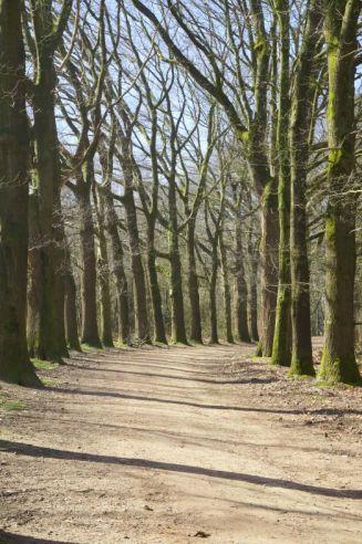 The massive woods on the Grebbeberg