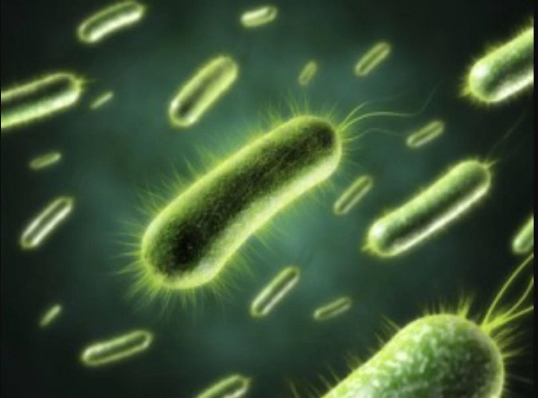 Moh Finally Explains Heat Resistant Bacteria Behind