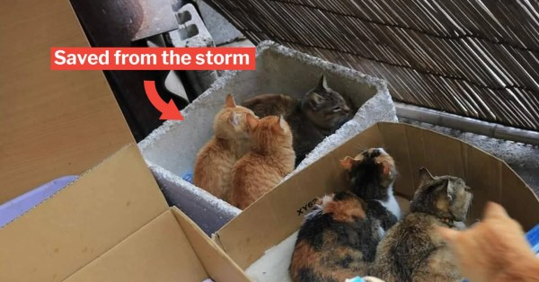Japan's Okishima Cats Are Safe As They Were Sheltered During The Typhoon