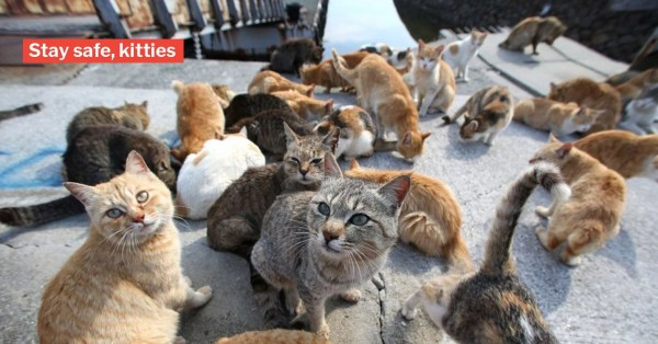 Japan Typhoon May Hit Okishima Cat Island & We're All Worried For The Kitties