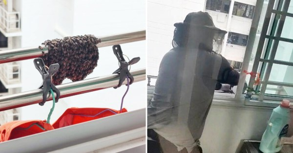 Over 200 Bees Clump Together At Punggol HDB Laundry Pole, Town Council Helps Remove Them