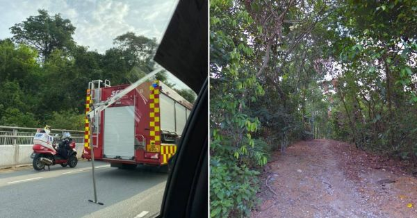 31-Year-Old Man Found Hanging From Tree At Dairy Farm Nature Park, Police Investigating Incident
