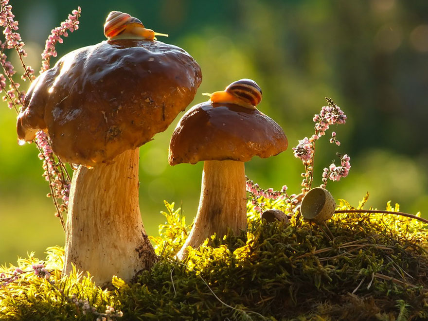 an-incredible-world-of-mushrooms-2