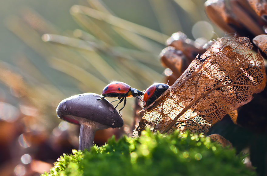 an-incredible-world-of-mushrooms-34