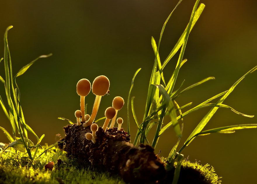man-incredible-world-of-mushrooms-32