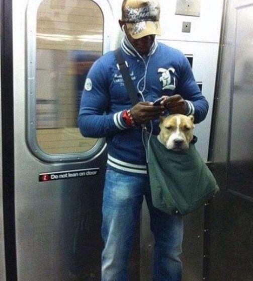 pitbull-in-bag