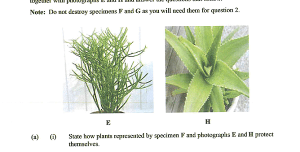 KNEC KCSE 2019 Biology Paper 3 (With Marking Scheme)
