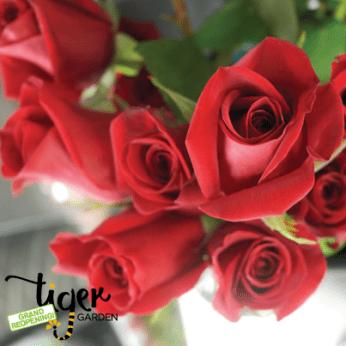 Thurs-Roses-Special-Logo (1) - Copy