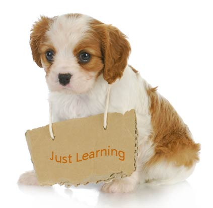 Image result for puppy training images