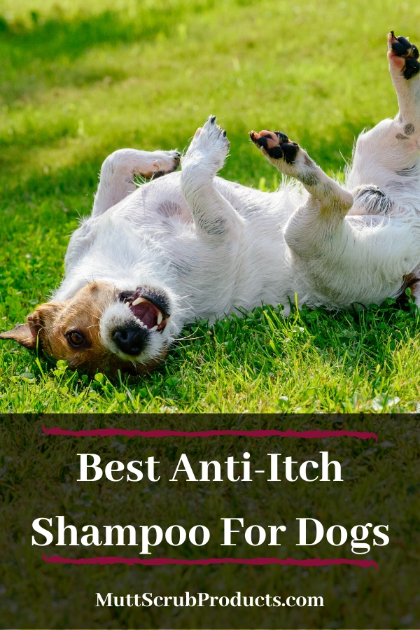 Best Anti-Itch Shampoo For Dogs