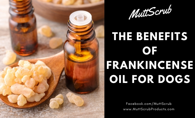 The Many Benefits of Frankincense for Dogs