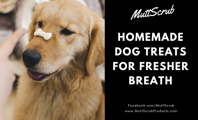 Dog Treats You Can Make At Home To Freshen Your Dog's Breath