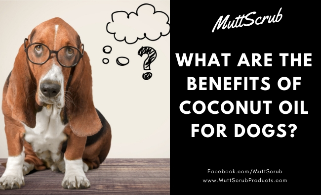 Coconut Oil For Dogs: The Amazing Benefits