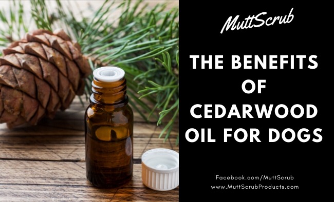 Cedarwood Oil Benefits for Dogs