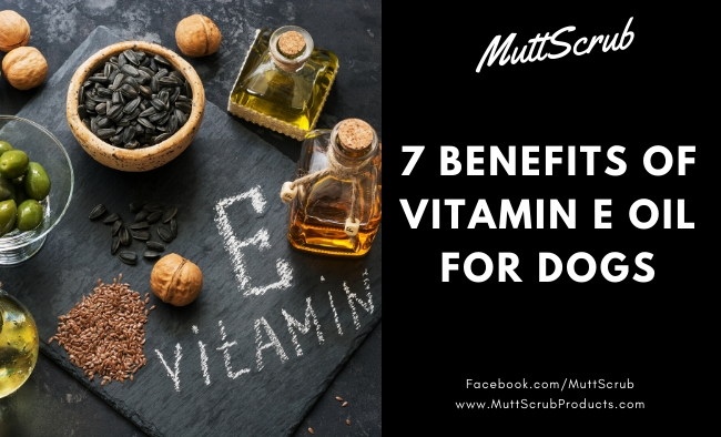 7 Amazing Vitamin E Oil Benefits For Dogs