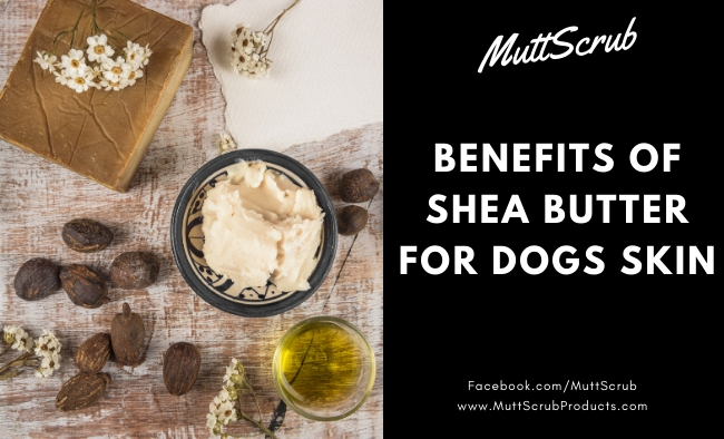 Benefits of Shea Butter for Dogs' Skin