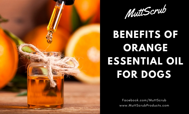 The Energizing Benefits of Orange Essential Oil For Dogs