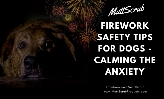 New Year's Eve Safety Tips for Dogs