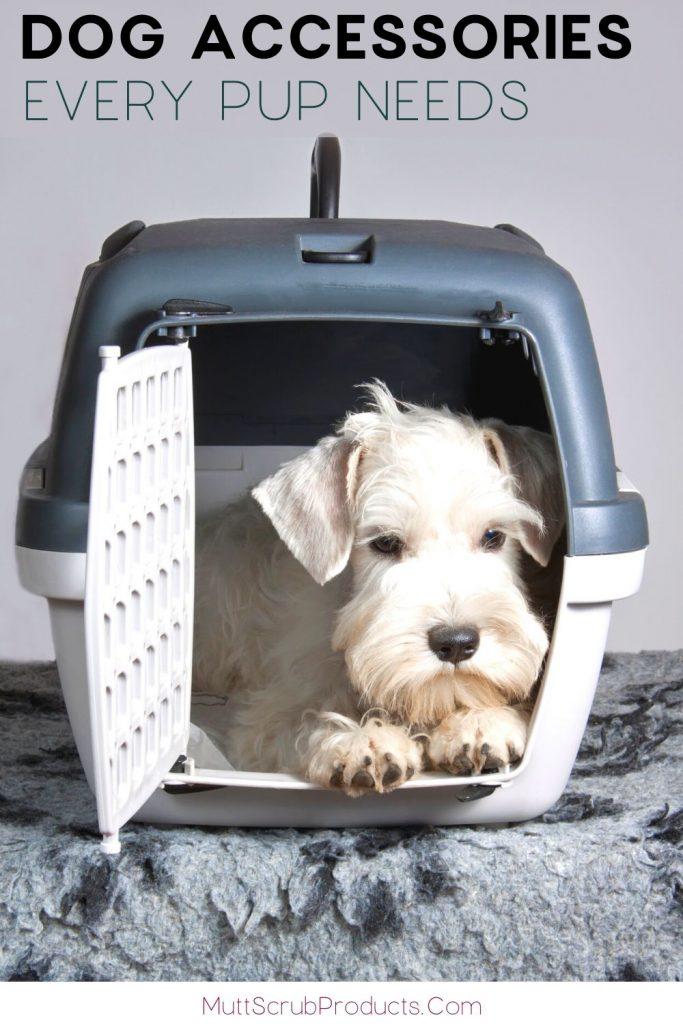 white terrier in travel carrier