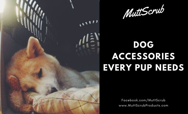 Dog Accessories Every Pup Needs