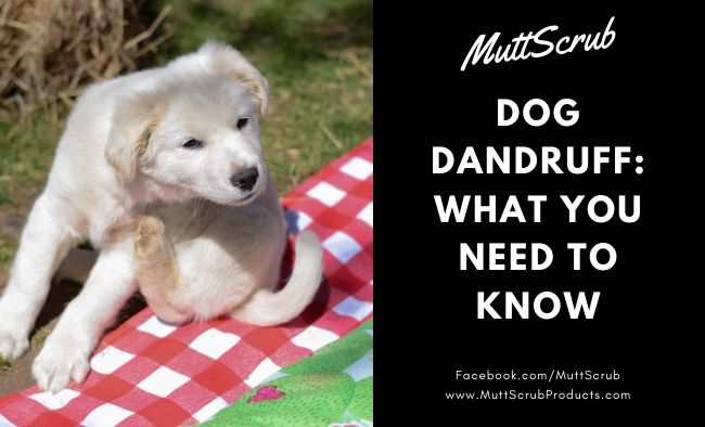 Dog Dandruff: What You Need To Know And How To Treat It