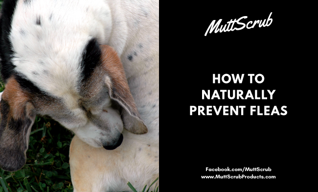 How To Naturally Prevent Fleas