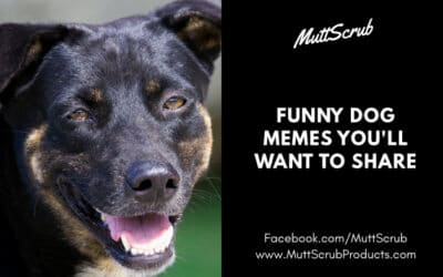 Funny Dog Memes That Will Have You Rolling