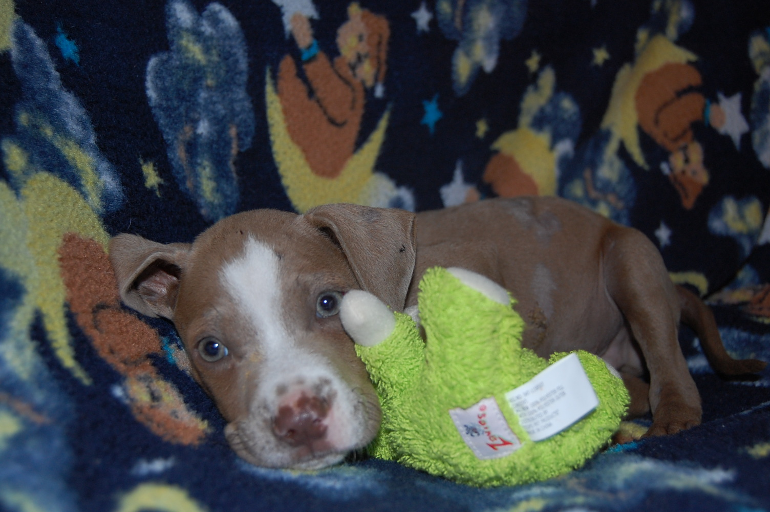 Trooper is an eight week old puppy that was left for dead after being hit by a car in the road. Muttsn-Stuff needs donations to pay for the medical care for his broken pelvis and other wounds.
