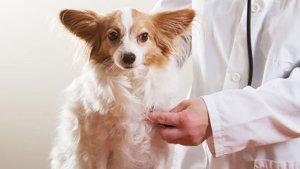 El 80% de las llamadas al seguro de mascotas en verano es por accidente o enfermedad