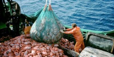 Aseguradoras del mundo contra la pesca pirata